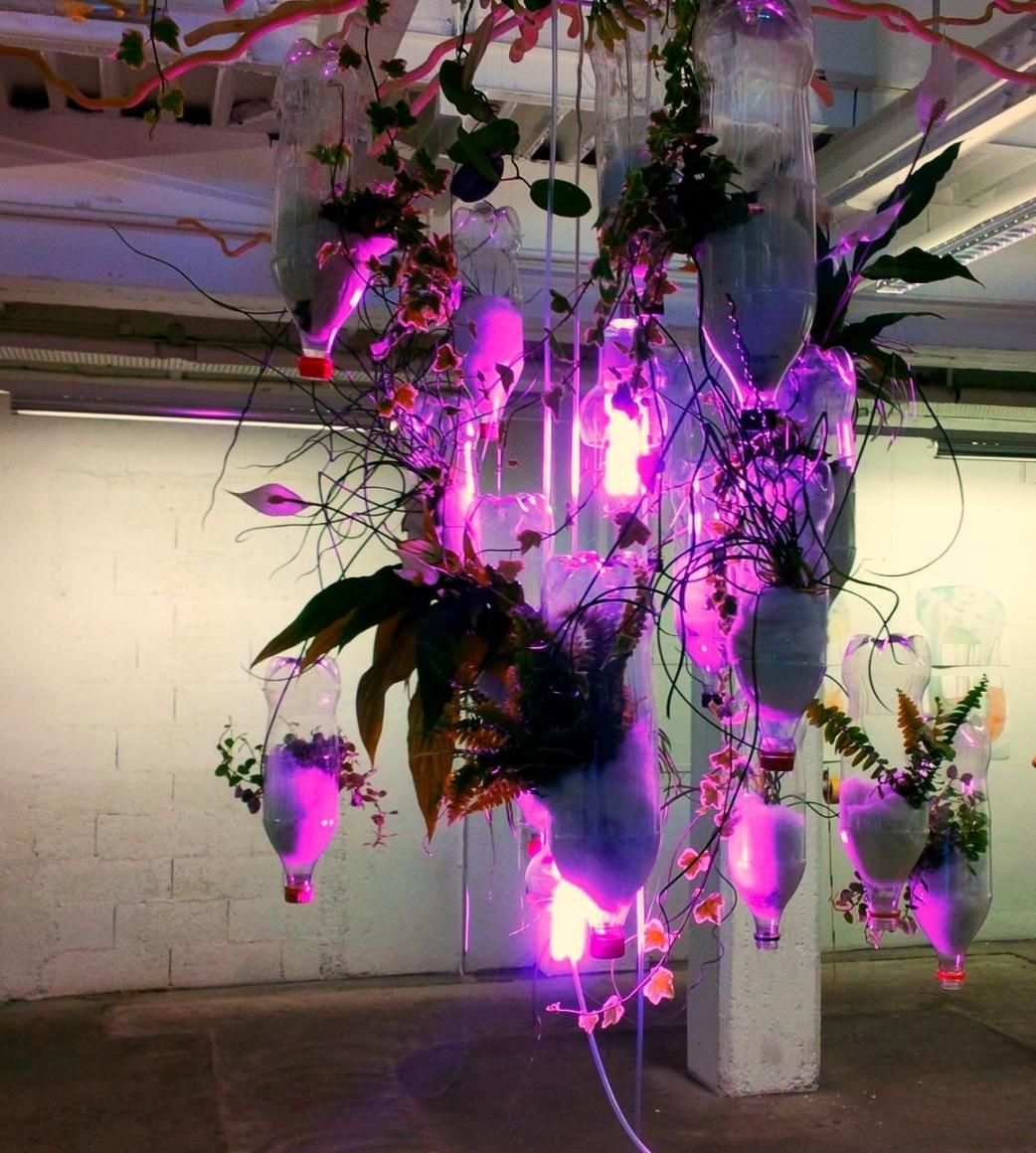 Installation poétique de plantes dépolluantes